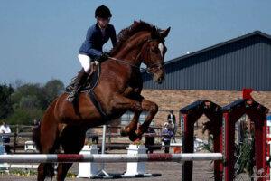 kæledyrs fotografering, heste fotografering